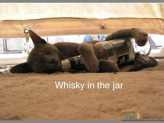 Image result for whiskey in the jar funny