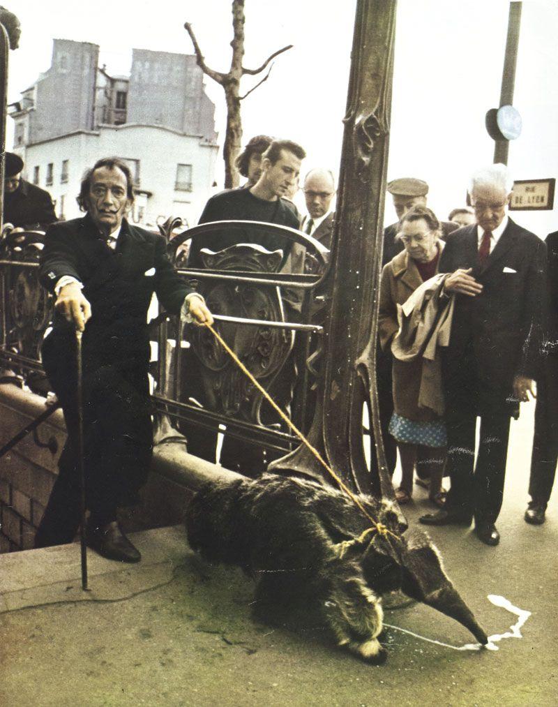 Patrice Habans, Salvador Dalí sortant du sous-sol du subconscient tenant en laisse un tamanoir romantique, l'animal qu'André Breton avait choisi comme ex-libris