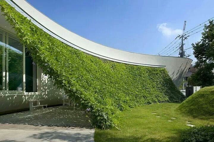 Plant wall for shade