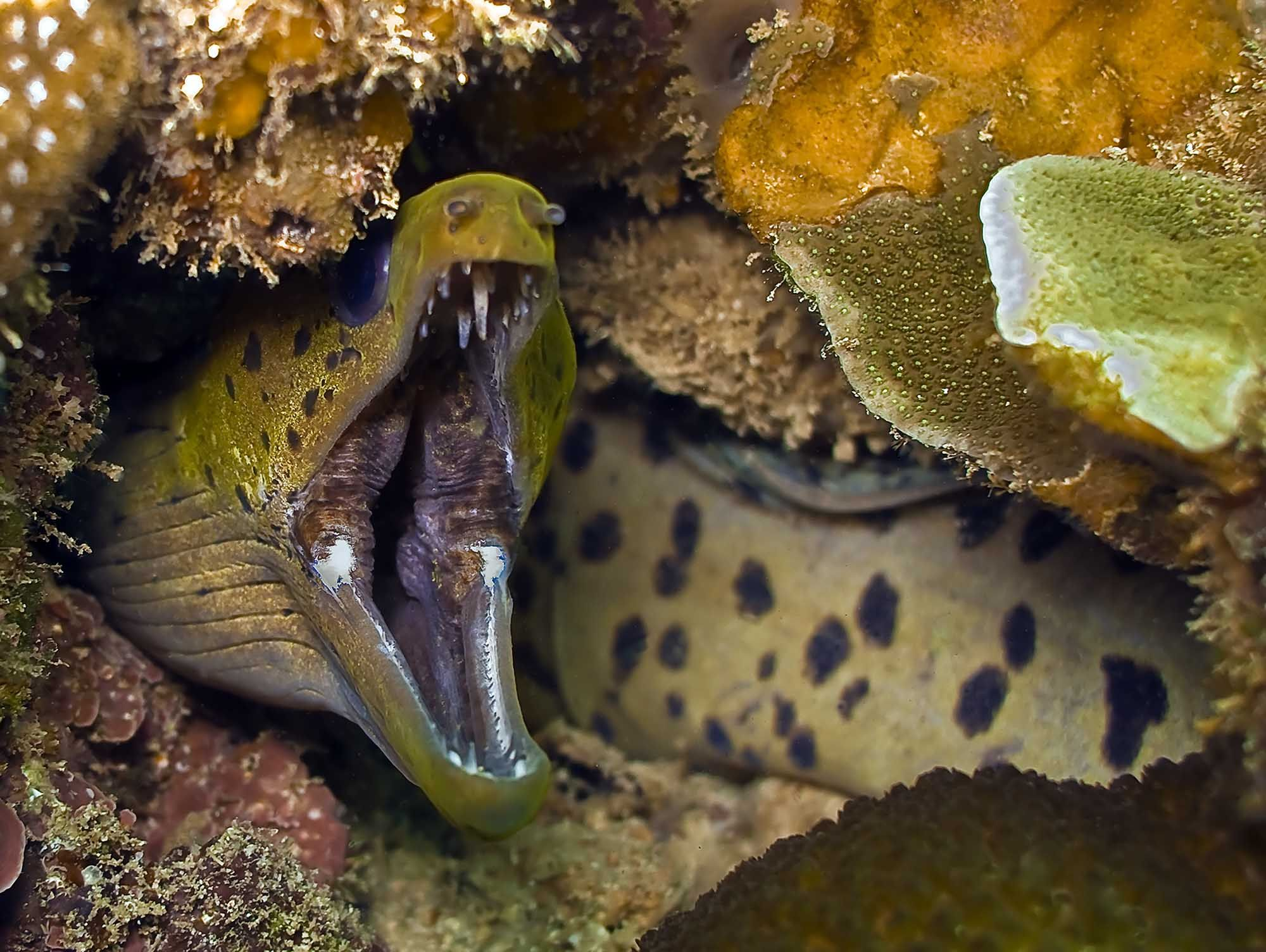 moray eel madang ples bilong mi fish pinterest wildlife