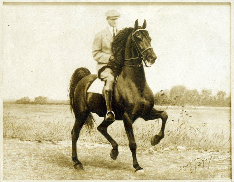 Here's the action shot taken on that one occasion when George Ford Morris rode Rex McDonald. Ben Middleton said, right after he snapped the camera, that the result would be the best action image ever taken of his prize stallion -- and he was probably right.