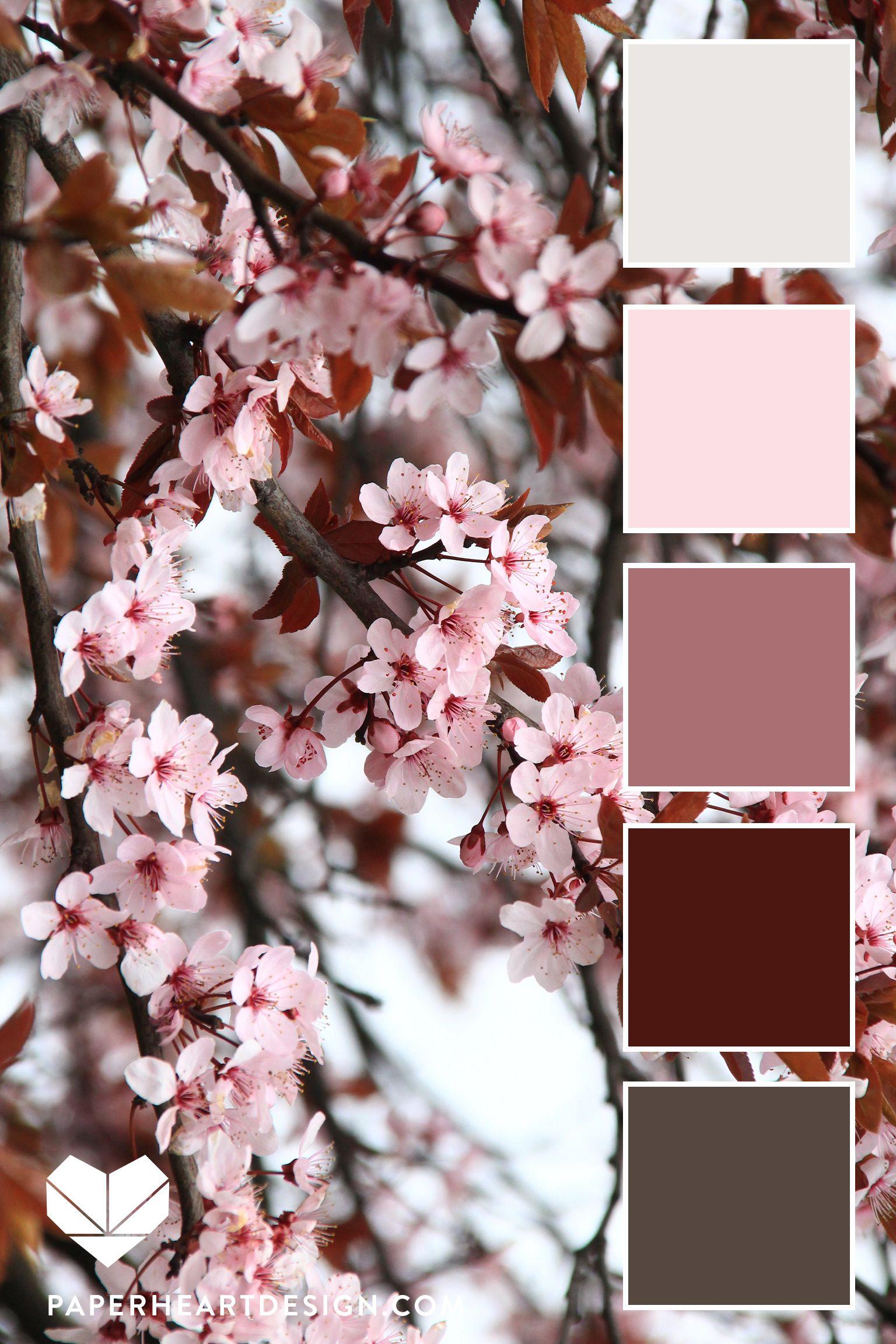 Cherry Blossom Color Palette Flower Inspired Color Scheme Color Schemes Color Schemes Colour Palettes Color Palette Design