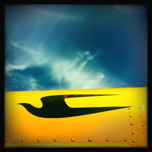 blue bird bus logo wwwpixsharkcom images galleries