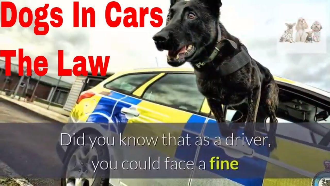 Is It Illegal To Have A Dog Loose While Driving Why You Should