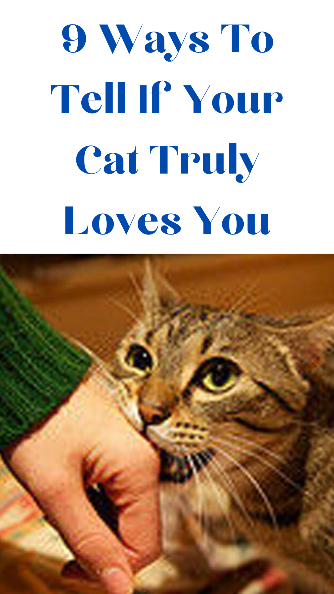 9 Ways To Tell If Your Cat Truly Loves You In 2020 Cat Lover Quote Cat Lover Tattoo Cat Language