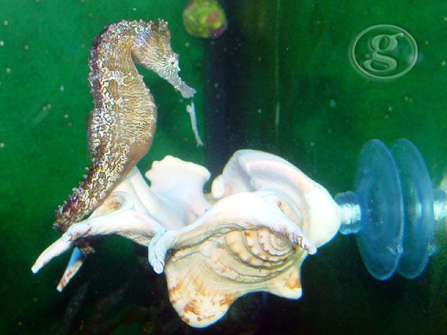 seahorse feeding station
