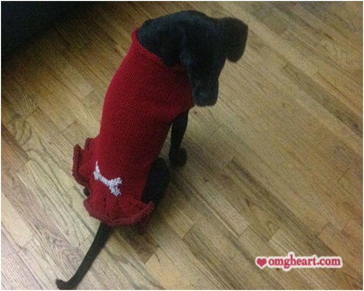 Crochet Dog Sweaters (Free Crochet Patterns & Video Tutorials)   Dog ...