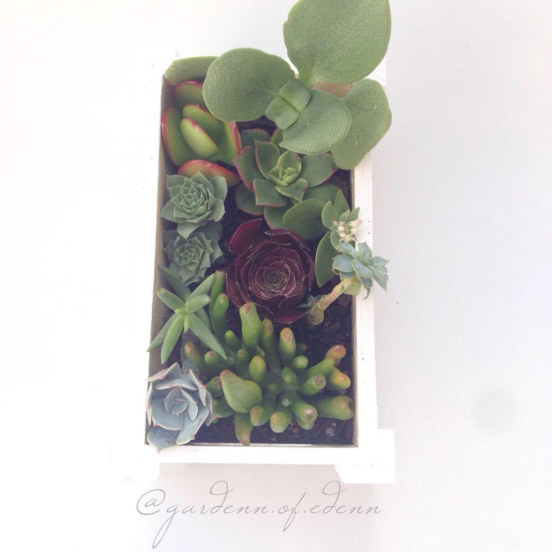 My own little secret garden!  #succulents #succs #succulentlove #plants #garden #gardennofedenn #melbourne #handmade #homemade #unique #cactus #cute #pretty #individual #weloveplants #succulentlove #hanging #cord
