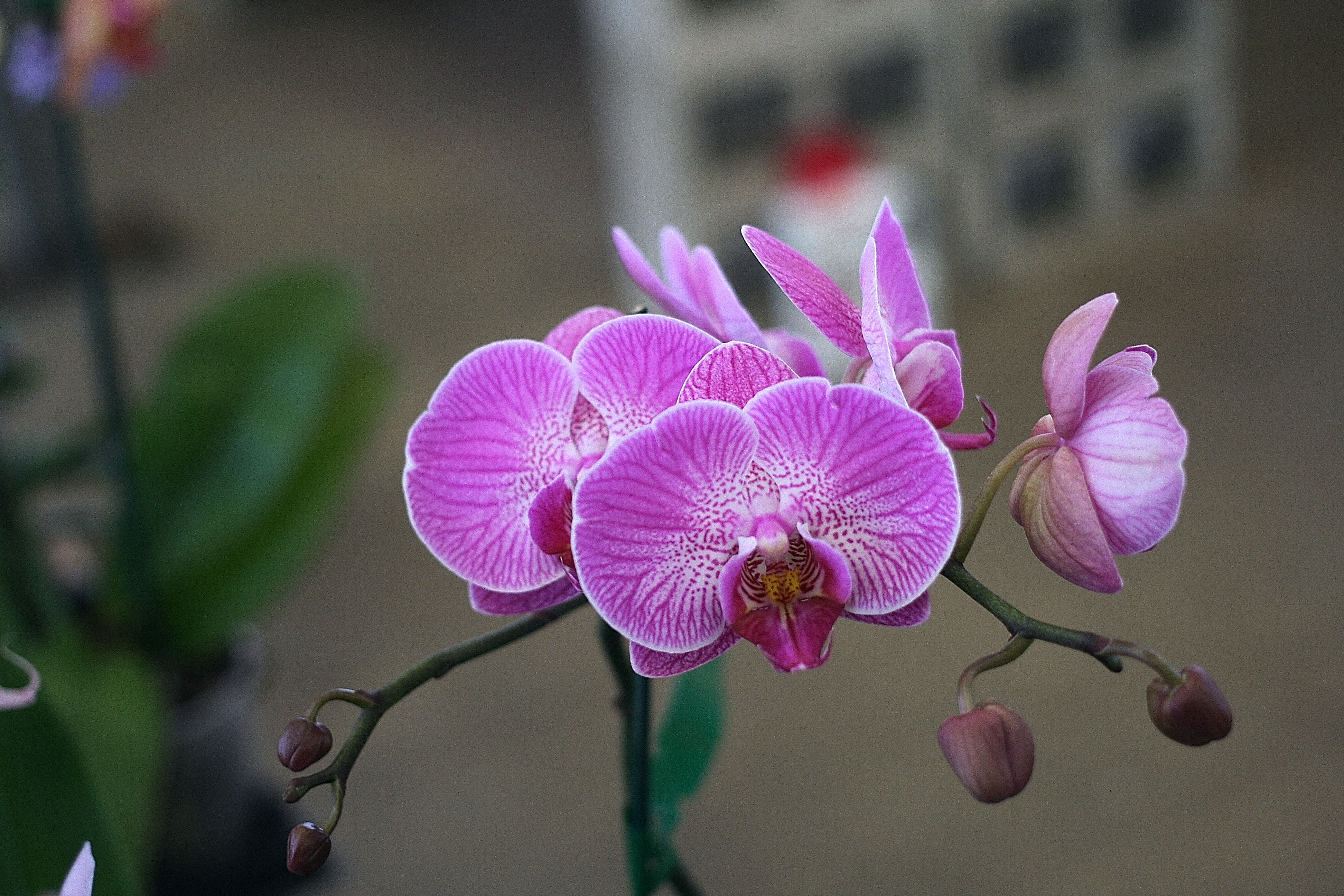photo by Elizabeth Brownfloralphotography floraldesign