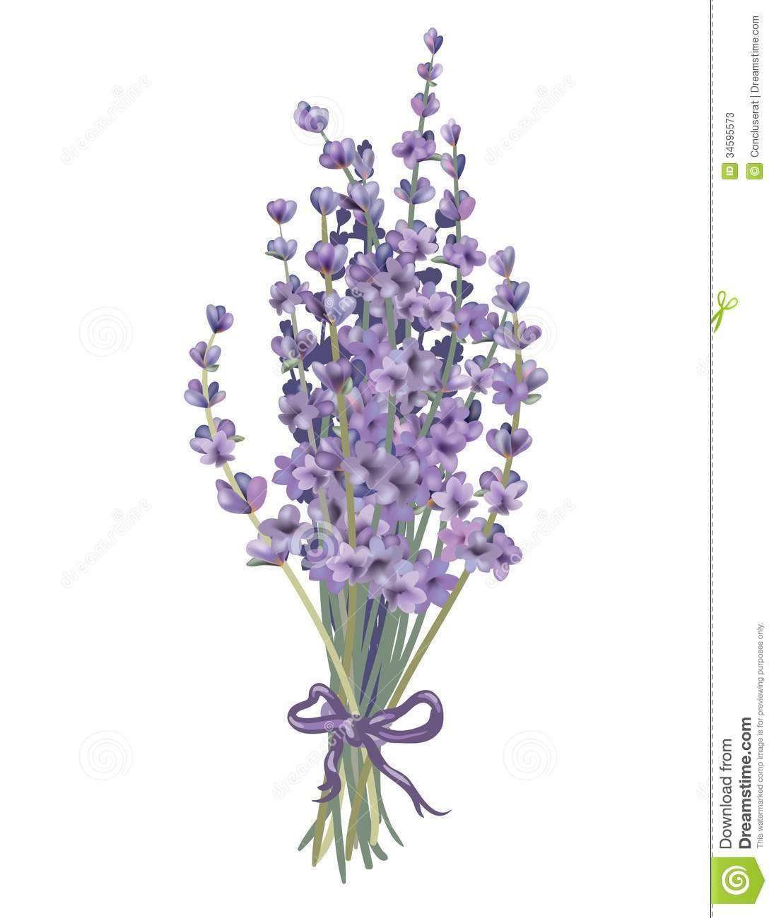 dibujo lavanda  Plantas medicinales  Pinterest  Lavender