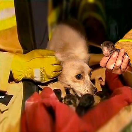 Hero dog saves four newborn kittens from a house fire