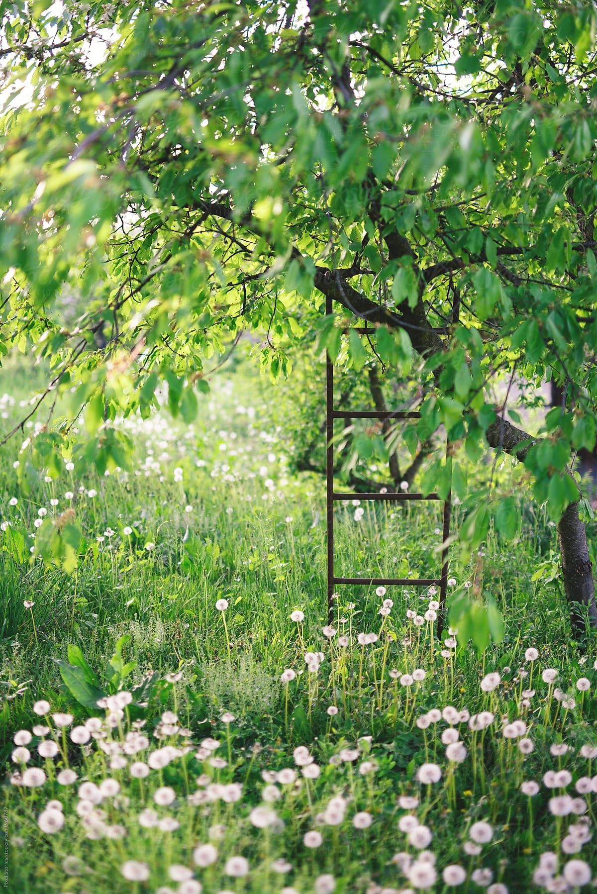 Ladder on tree in overgrown garden by Pixel Stories for Stocksy United #overgrownaesthetic