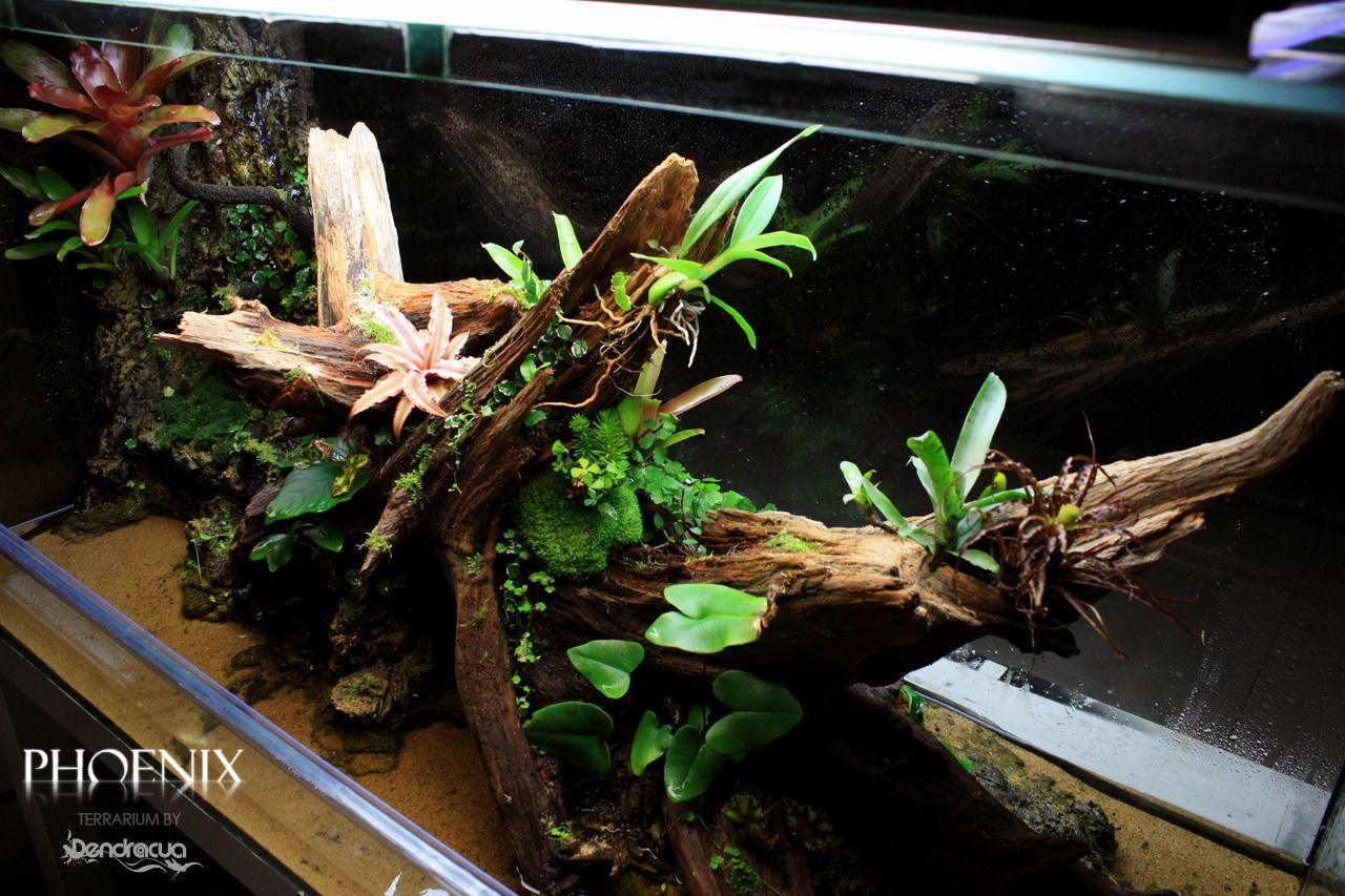 Phoenix terrarium by dendroacua os queremos presentar for Historia de los jardines verticales
