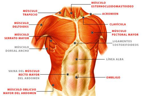 CubaEduca - Biología | Pilates | Pinterest | Biología, Anatomía y ...