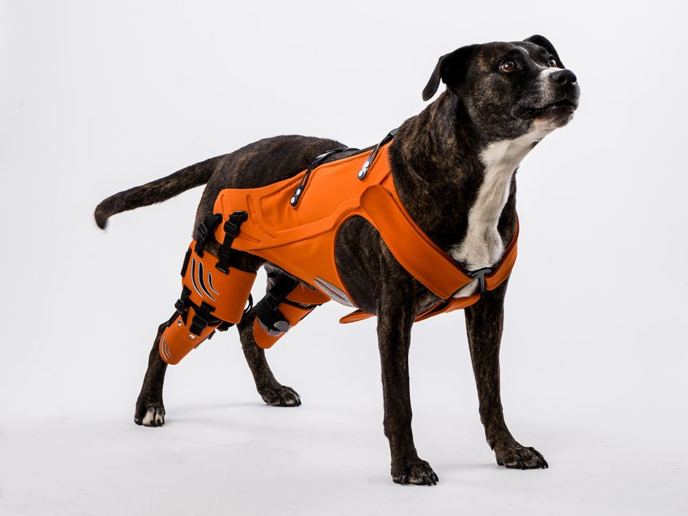 A Smart Harness For Dogs With Hip Dysplasia Dog Harness Hipster