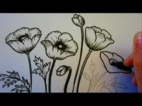 How To Draw Poppies Flowers Poppy Drawing Flower Drawing Drawing Tutorial
