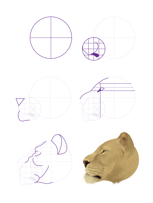 Drawingbigcats 2 6 Lion Head Profile Images Cats Big Spotted In
