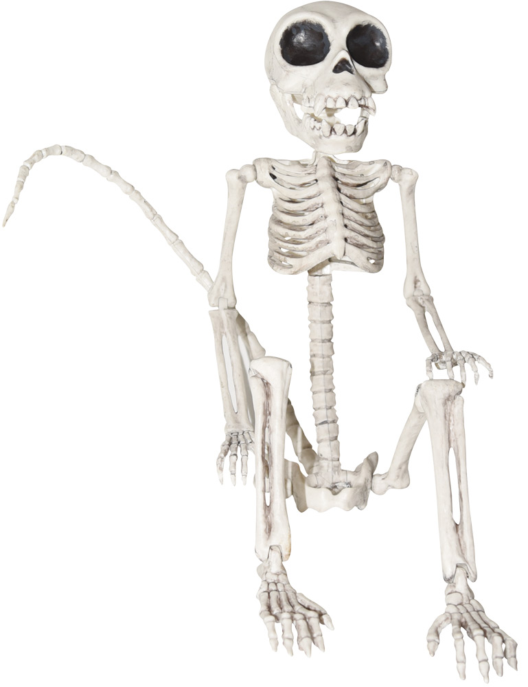 Spooking Intensifies Spooky Scary Skeleton Meme Poster By Sachetti Store Redbubble Spooky Scary Skeleton Drawings Funny Phone Wallpaper