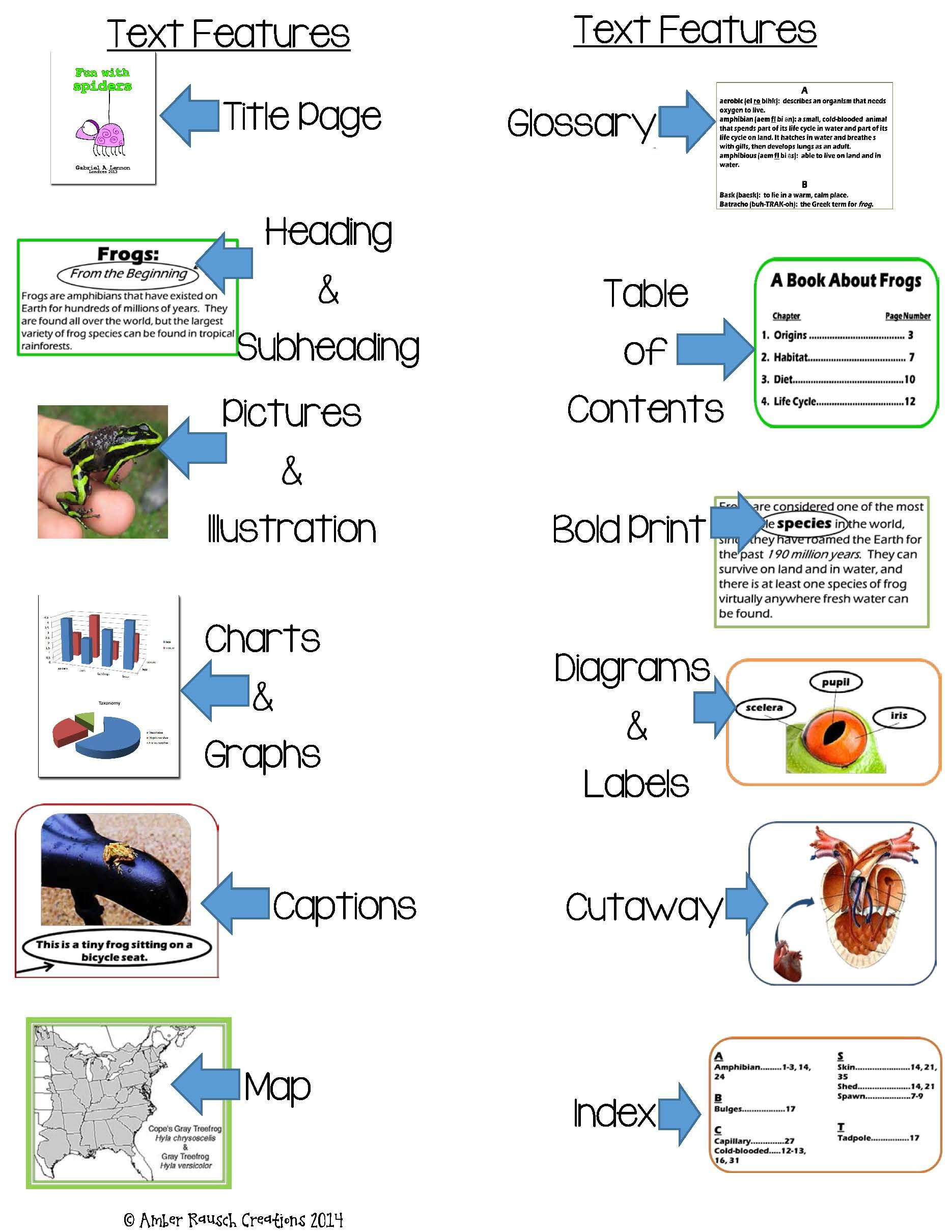 Non Fiction Text Feature Activities