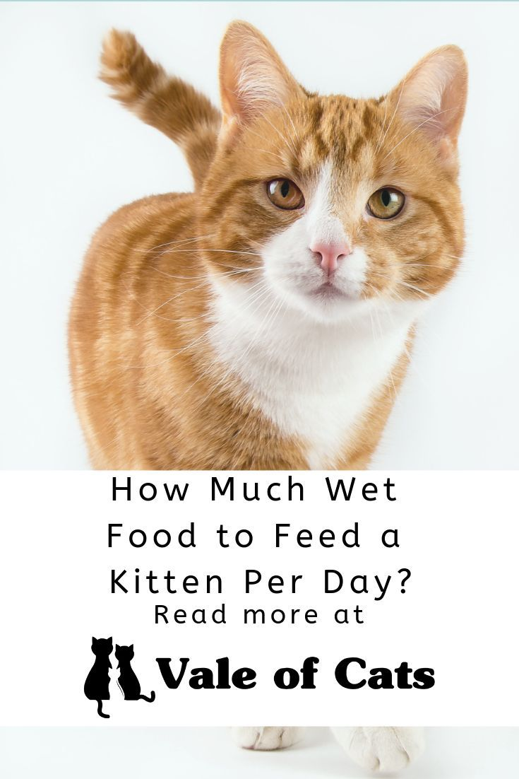 Follow This Guide To Figure Out How Much Wet Food To Feed A Cat So Your Cat Can Stay Happy Healthy And Properly Fed Kitten Food Cat Food Canned Cat Food