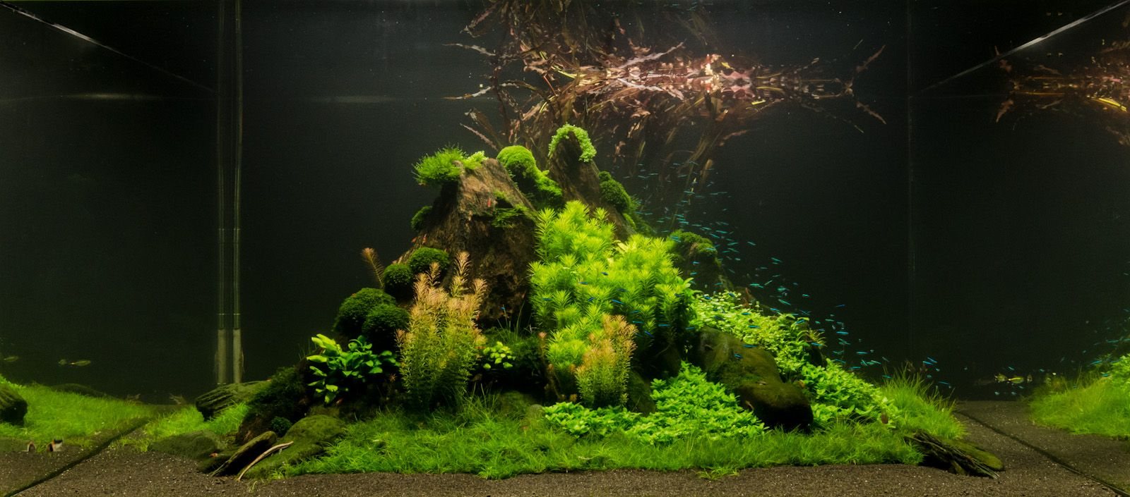 Tropical freshwater aquarium fish uk - James D Arcy
