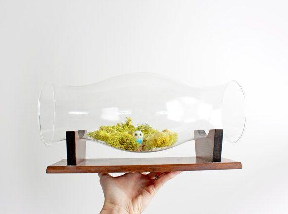 Vintage Glass Display Case / Terrarium