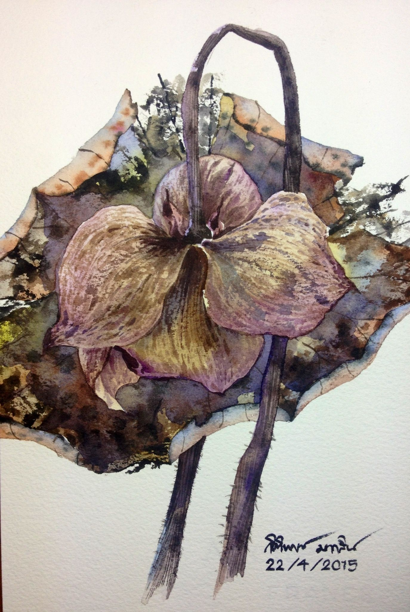 Dead lotus paintings by ti watercolor pinterest lotus dead lotus izmirmasajfo
