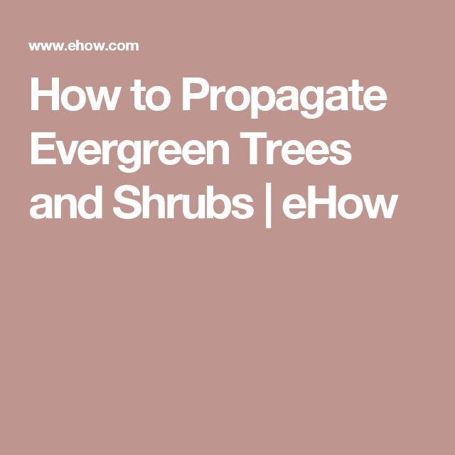 How to Propagate Evergreen Trees and Shrubs | eHow