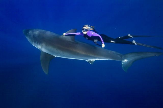 Оушен Рамси | Большая белая акула, Животные, Акула