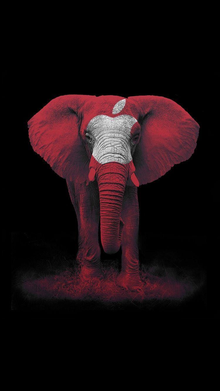 Iphone Wallpaper Red Elephant Apple Wallpaper Elephant Iphone Wallpaper