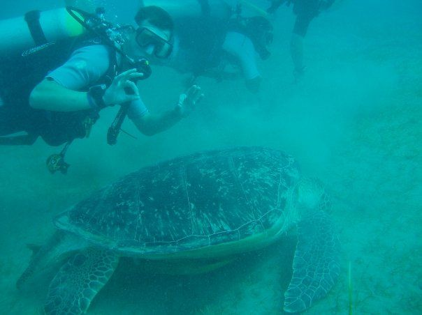 Scuba diving in Egypt. The Marsa Alam area. Visit to Turtle Bay - Abu Dabbab