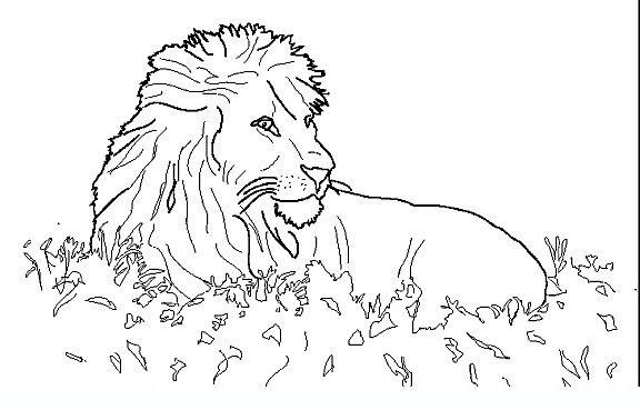 Animali Savana 10 Disegni Da Colorare Per Adulti Disegni Da