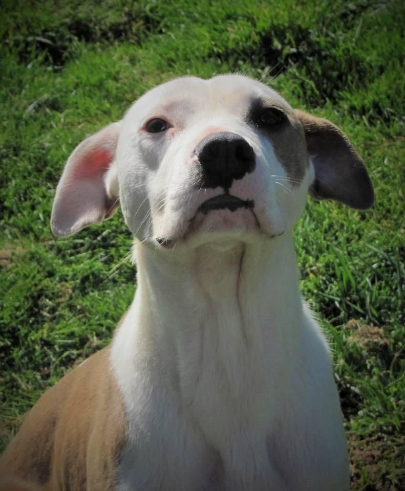 Adopt Ferdinand on Dog search, Ferdinand and Cattle