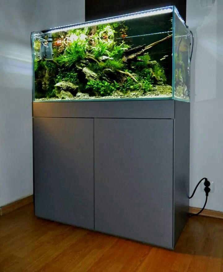 Freshwater | Aquascape aquarium, Aquarium design, Planted ...