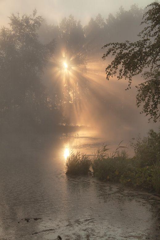 nature / photopaysage / lumière / crépuscule / brume / marais / arbre / pluiesnuhiriennes / vertforêt #fallscenery