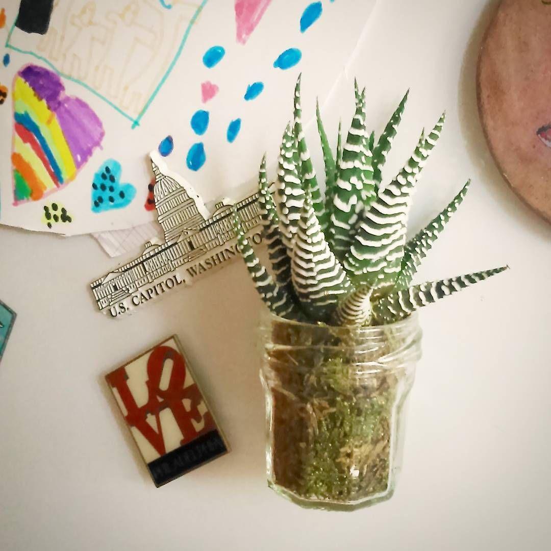 Le Petit Pot A Confiture Aimante Magnet Mini Plante Grasse Deco