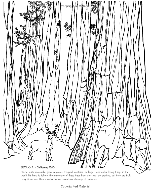 The National Parks Coloring Book Sophie Tivona 9780062560018 Books Amazon Ca Coloring Books National Parks Color