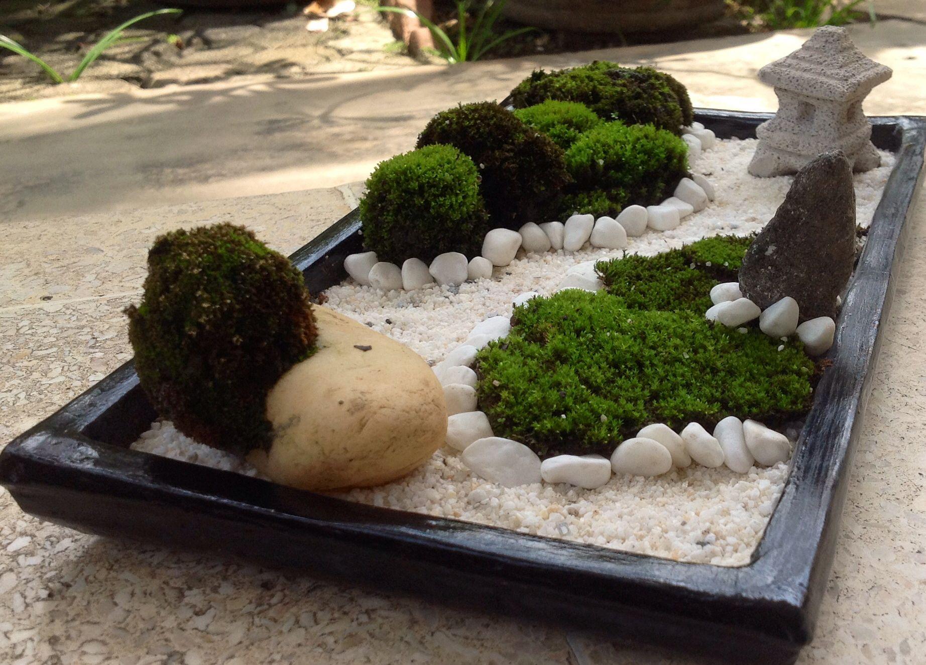 moss on the white stone mini zen garden pinterest white stone mini zen garden and gardens. Black Bedroom Furniture Sets. Home Design Ideas