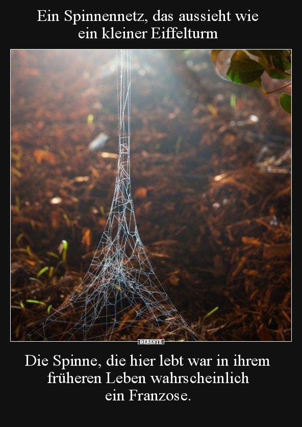Ein Spinnennetz, das aussieht wie ein kleiner Eiffelturm..
