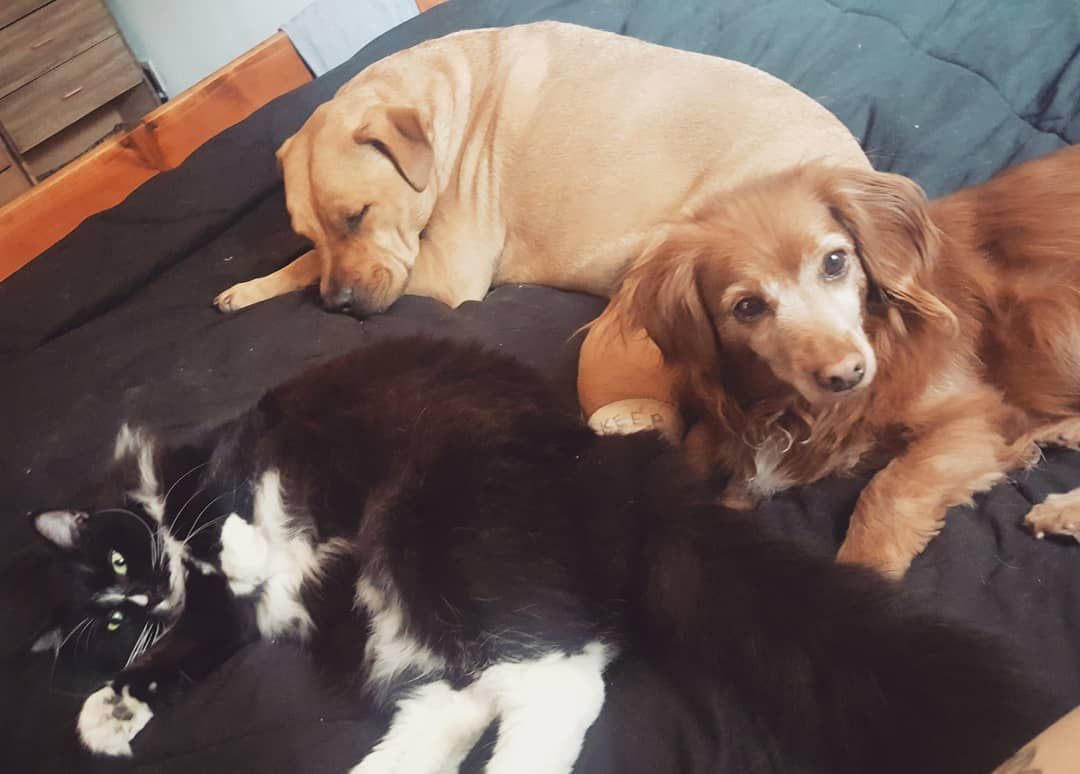 An Introduction To Our Household Pets From Katie S Perspective In The Beginning There Was Blinken He S The Kitty He Was Found In A Box Dog Boarding Cat Sitting Dog Lovers