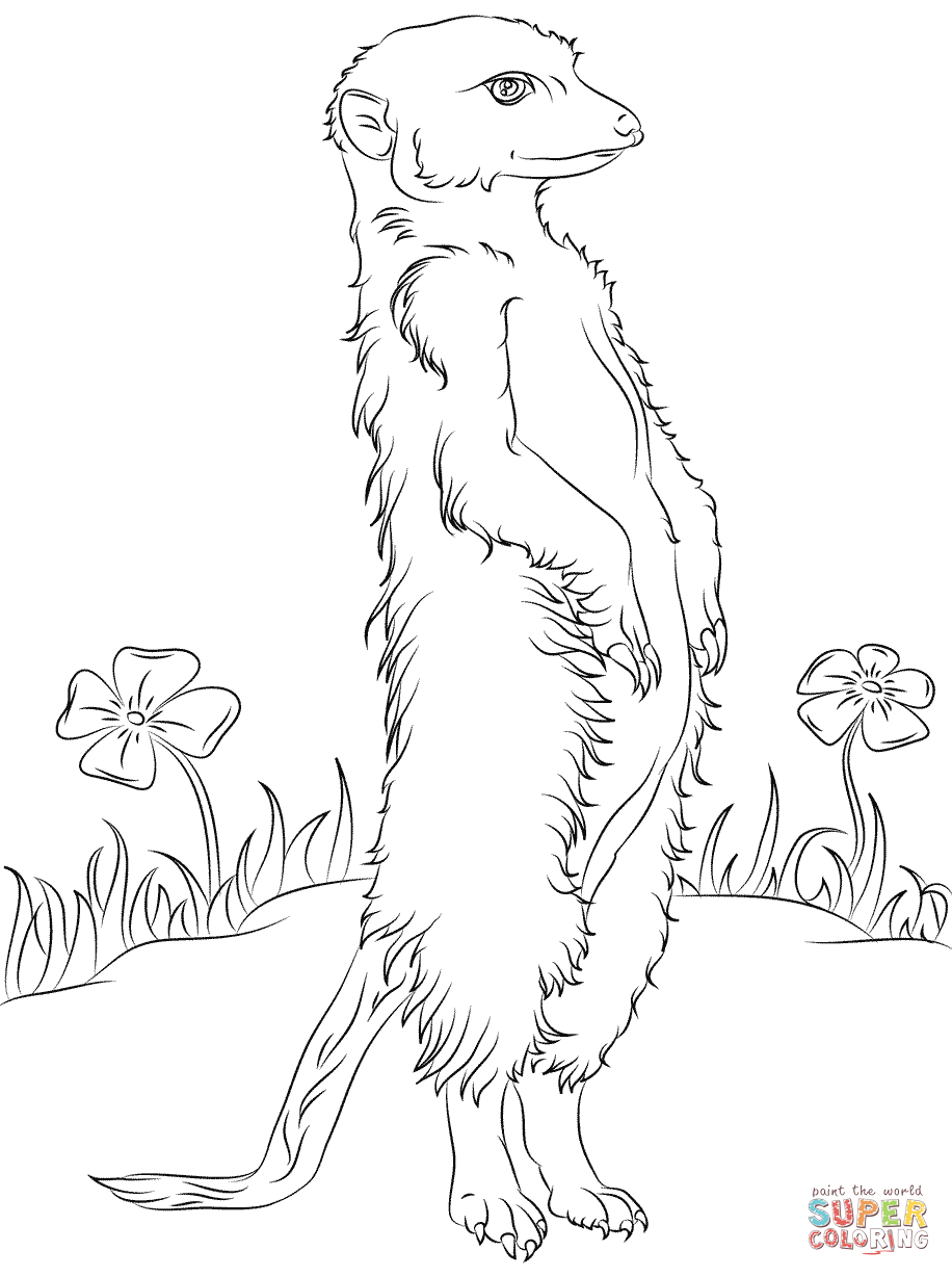 Meerkat And Flowers Coloring Pages Png 916 1228 Erdmannchen Tiere Zeichnen Tiere