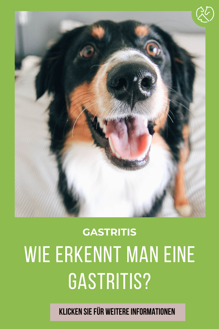 Gastritis Beim Hunde In 2020 Hunde Gesunde Hunde Wilde Tiere