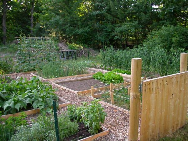 small backyard vegetable garden ideas check out this - Vegetable Garden Ideas Designs Raised Gardens