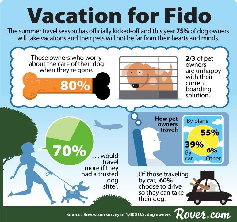 Vacationing With Your Dog Infographic Dog Infographic Pet