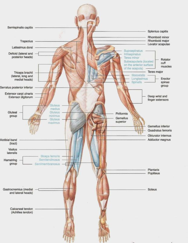 Poster For Muscular And Skeletal Anatomy Of Ankle Anterior Foot Art