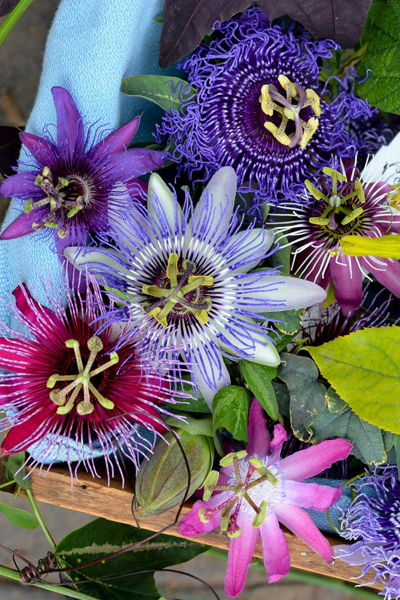 60 Off Passiflora Protea Starter Kits Unusual Flowers Passion Fruit Flower Amazing Flowers