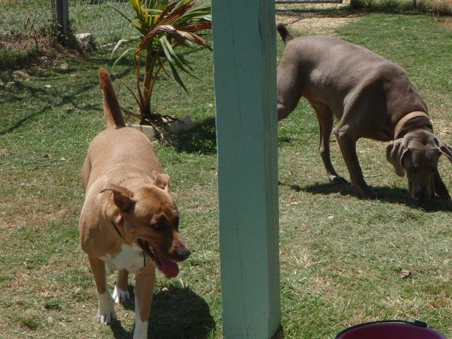 Dog Boarding Rate 25 Per Night We Have 40 Open Air Kennels Each