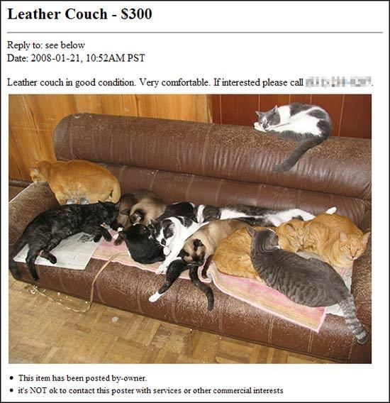Craiglist Ad Reads Leather Couch In Good Condition If Interested Please Call X And Mentions Nothing Of The Several Cats Stretched Out