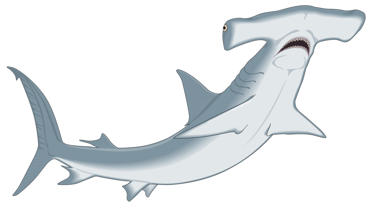 hamshark png clip art and album rh pinterest com