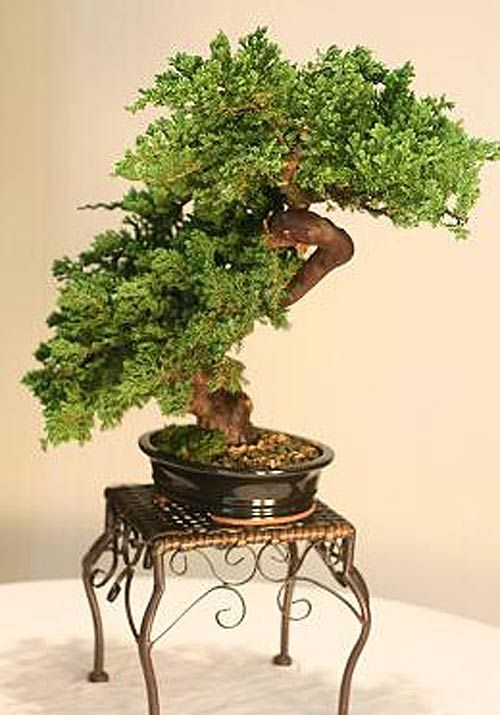 Artificial Bonsai Trees Windswept Preserved Bonsai Bonsai Tree Windswept Bonsai Indoor Bonsai Tree